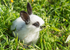 Rabbit in the grass Stock Photos
