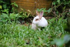 Rabbit on the grass Stock Photography