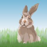 Rabbit on the grass Stock Image
