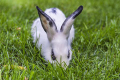 Bunny on grass Stock Photography