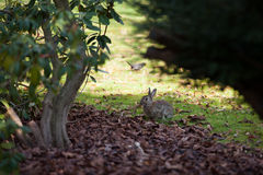 Rabbit at a grave yard Stock Images