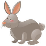 Rabbit with gray fur. Illustration vector illustration