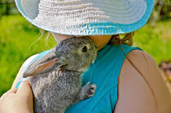 Rabbit gray on hands of girl in hat Stock Images