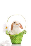 Rabbit in the green basket with daisies Stock Photo