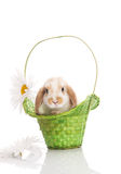 Rabbit in the green basket with daisies Royalty Free Stock Photos