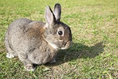 rabbit on the green field Stock Image