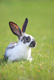 Rabbit on a green grass Stock Images