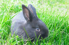 rabbit on green grass background Stock Images