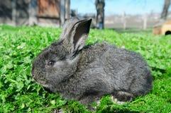 rabbit on green grass background Royalty Free Stock Photos