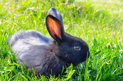 rabbit on green grass background Royalty Free Stock Image