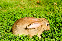 Rabbit on  green grass Stock Photo
