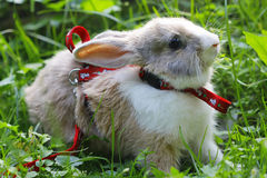 Rabbit in a green grass Stock Image