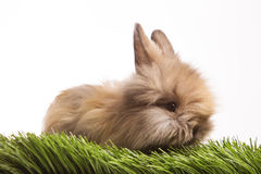 Rabbit in the green grass isolated on white Royalty Free Stock Photos
