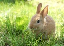 Rabbit on green grass Stock Image