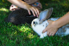 Rabbit in Green Grass with small child and rabbits in the backgr Stock Photography