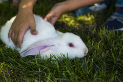Rabbit in Green Grass with small child and rabbits in the backgr Stock Images