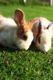 Rabbit in a green grass Stock Photo