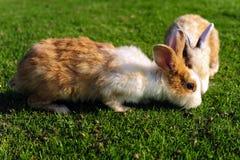 Rabbit in a green grass Stock Photos