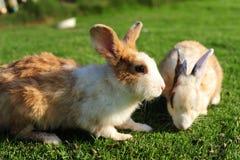 Rabbit in a green grass Royalty Free Stock Photos