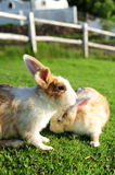 Rabbit in a green grass Stock Photography