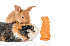 Rabbit and guinea pig with carrots Stock Image