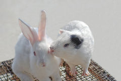 Rabbit and hamster Stock Image
