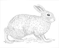 Rabbit hand drawn Stock Photos