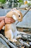 Rabbit on hand Royalty Free Stock Photos