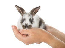 Rabbit in hands Royalty Free Stock Images