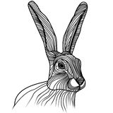 Rabbit or hare head vector illustration. Rabbit or hare head vector animal illustration for t-shirt. Sketch tattoo design Royalty Free Stock Images