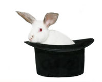 Rabbit in a Hat Stock Images