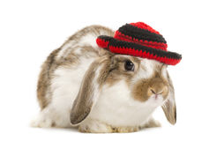 Rabbit with hat, isolated Royalty Free Stock Image