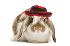 Rabbit with hat, isolated. On white Stock Photo
