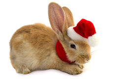 Rabbit in the hat of Santa Claus . Stock Photography