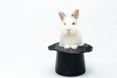 Rabbit in a hat. On a white Stock Photo