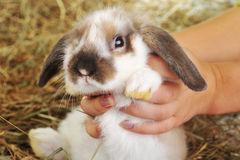 Rabbit on hay stock images
