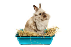 Rabbit in hay Stock Photography
