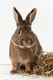 rabbit with hay stock photos
