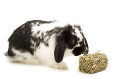 Rabbit and hay stock photography