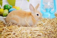 Rabbit on the hay Royalty Free Stock Photos