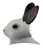 Rabbit head Stock Image