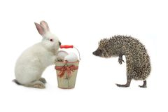Rabbit and hedgehog Stock Images