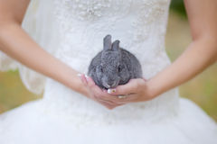 A rabbit in her arms. Rabbit on hands of the bride Royalty Free Stock Images