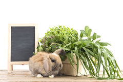 Rabbit with herbs Stock Images