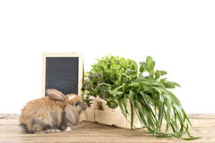 Rabbit with herbs Stock Image