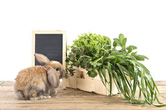Rabbit with herbs Royalty Free Stock Images