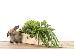 Rabbit with herbs Royalty Free Stock Photo