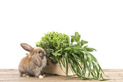 Rabbit with herbs Stock Photography