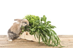 Rabbit with herbs Royalty Free Stock Photos