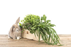 Rabbit with herbs Royalty Free Stock Photography